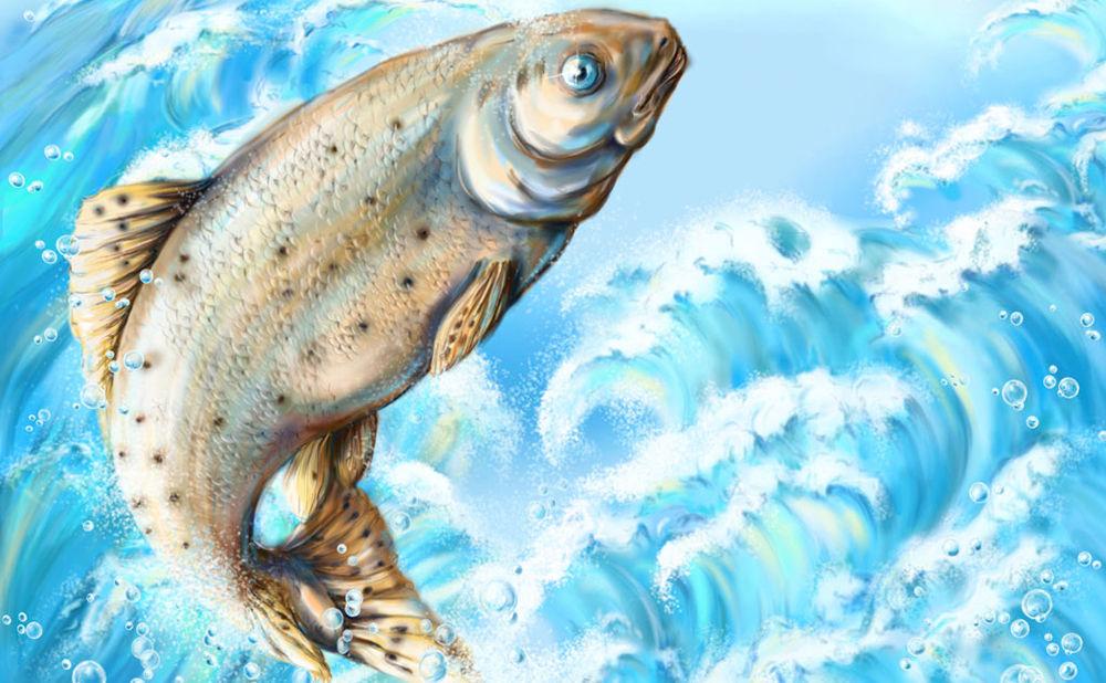 Правила перевозки живой рыбы
