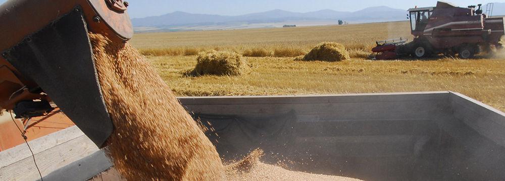 Процесс погрузки зерна