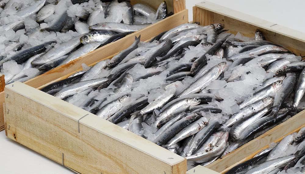 Транспортировка рыбы и морепродуктов